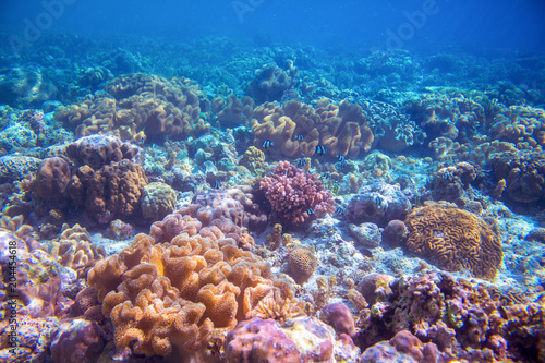 Tuinposter Koraalriffen Coral reef landscape on sea bottom. Warm blue sea view with clean water and sunlight