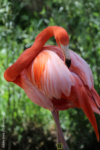 Staande foto Flamingo Flamingo Cleaning