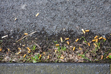 Cigarette Butts On The Street ...