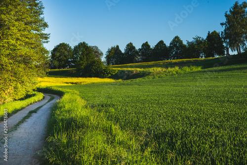 Poster Landschap Frühling Spaziergang Felder