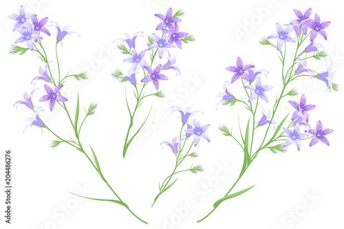 Bellflowers, set of hand drawn vector illustrations, imitation of watercolor painting Wallpaper Mural