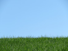 Skyline With Green Grass And Clear Blue Sky. Nature Background With Free Copy Space
