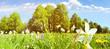 Leinwanddruck Bild Blumenwiese im Frühsommer