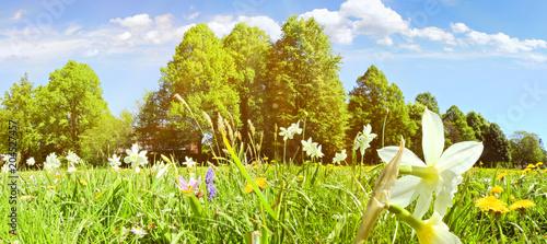 Leinwanddruck Bild - ExQuisine : Blumenwiese im Frühsommer
