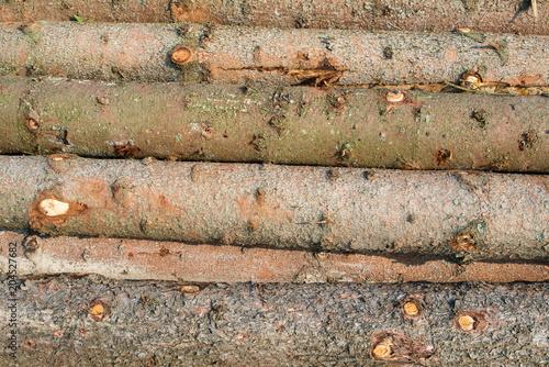 Stampe  Timber harvesting. Pile of cut fir logs