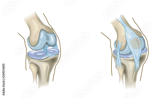 Photo The knee joint, anatomy, medical illustration