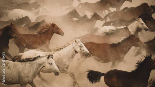Obraz na płótnie Horses run gallop in dust