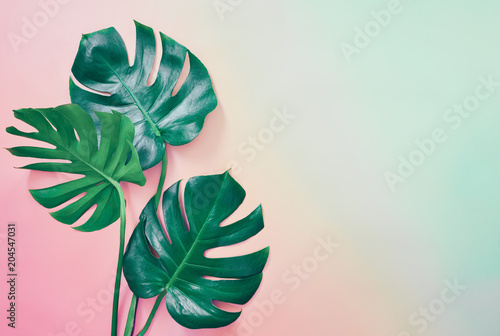 Stampa su Tela  Summer tropical background