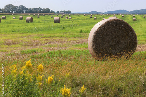 Foto op Canvas Pistache The field with bales of haystacks.Rural landscape with cloudy blue sky over the field full of rolled hay bales. Agriculture and farming background. Midwest USA, Wisconsin, Madison area.