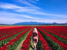 Traveler Girl Walks The Tulip ...