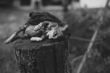 Poor Skinny Dead Cat