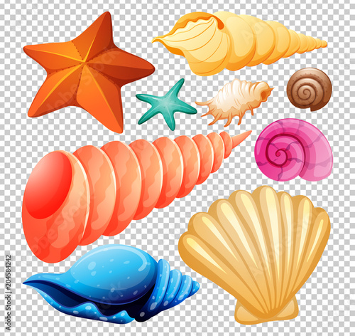 Fotografia A Set of Seashell for Beach