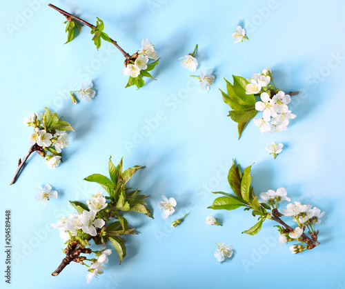 Spring nature background with blossom in blue pastel color, flat-lay of pear blossom flowers over light blue background, top view, springtime concept. Greeting card or wedding invitation