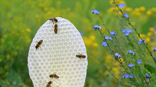 Round White Honeycomb With Bee...