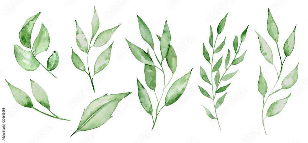 Fototapety, obrazy: Watercolor green leaves and brunches Greenery herb hand rawn illustration