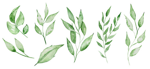 Watercolor green leaves and brunches Greenery herb hand rawn illustration