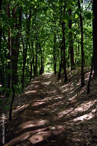 Deurstickers Weg in bos ścieżka w lesie