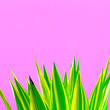 Leinwanddruck Bild - Plants on pink concept. Fashion green. Aloe