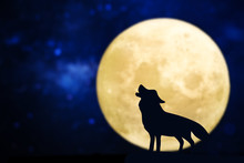 Howling Wolf Silhouette Over A...