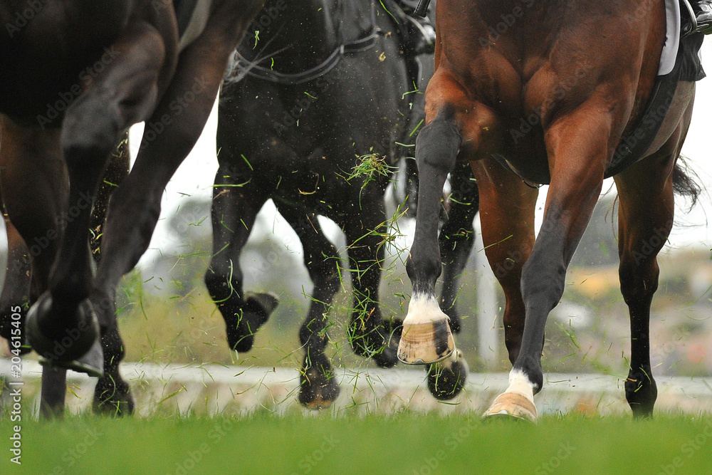 Fototapety, obrazy: Horse racing action