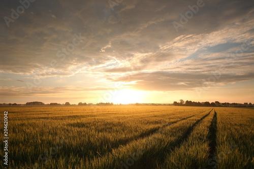 Foto auf Gartenposter Landschappen Sunrise over a field of grain