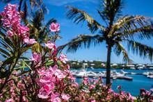 Barr's Park, Hamilton, Bermuda...