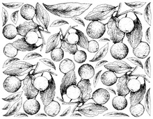 Hand Drawn Background Of Buffalo Thorn Fruits