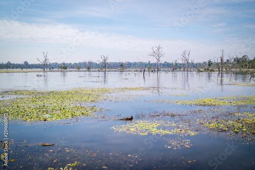 Fotografija Sumpflandschaft in Kambodscha