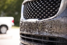 Insects And Black-flies On Fro...