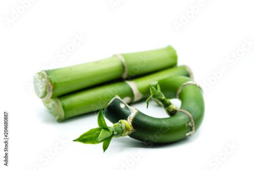 Bambus isoliert freigestellt auf weißen Hintergrund, Freisteller