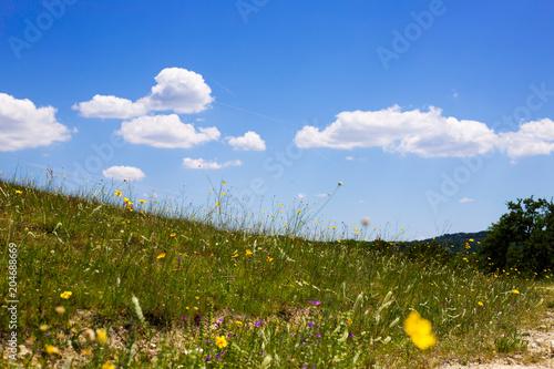 Tuinposter Weide, Moeras Field