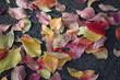 canvas print picture - Strasse, Park, Laub