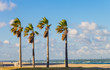 Palm trees on the beach with the ocean and sky in the background