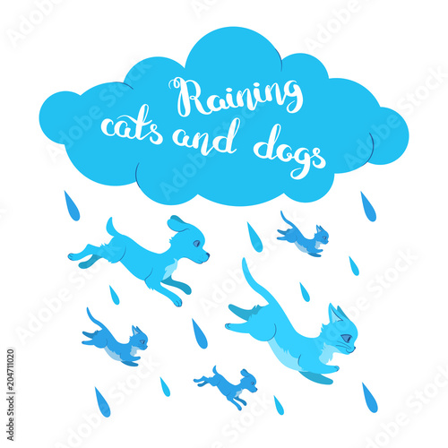 Cuadros en Lienzo Raining cats and dogs