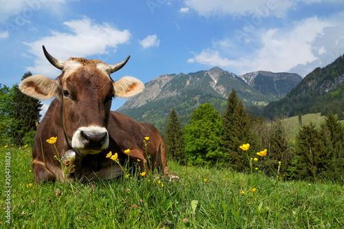 Keuken foto achterwand Koe Kuh auf Alpe liegt im Gras, Bayern