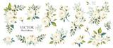 Fototapeta Kwiaty - Set of floral branch. Flower white rose, green leaves. Wedding concept. Floral poster, invite. Vector arrangements for greeting card or invitation design background