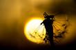 canvas print picture - Grashüpfer sitzt auf Pusteblume, Sommerlichesr Hintergrund