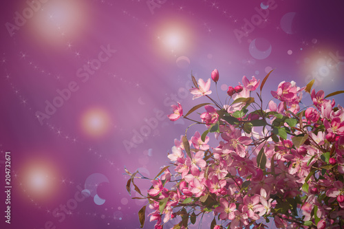 Fototapety, obrazy: Blossom tree on nature background. Beautiful spring scene with blooming tree, flowers and sunshine in blur style. Pink flower border, frame