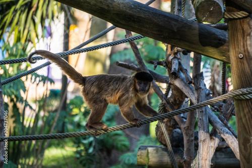 In de dag Aap Macaco Zoo Lisboa 1