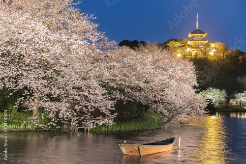 Poster Historisch geb. Yokohama Sankeien garden , a traditional and typical Japanese-style garden in Sakura bloom with light up