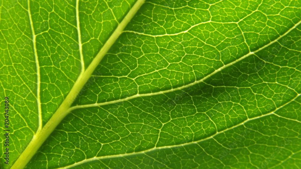 Fototapeta zbliżenie liścia