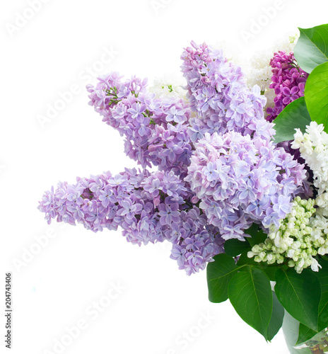 Poster Lilac Fresh lilac flowers