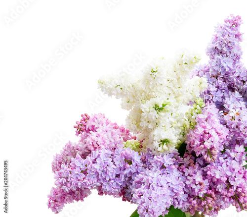 Foto op Canvas Lilac Fresh lilac flowers