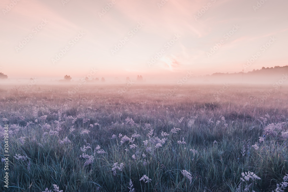 sunrise field of blooming pink meadow flowers