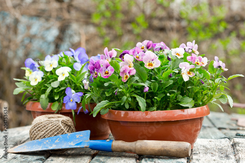 gardening tools and colorful pansy flowers