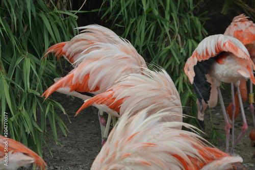 Papiers peints Flamingo Test