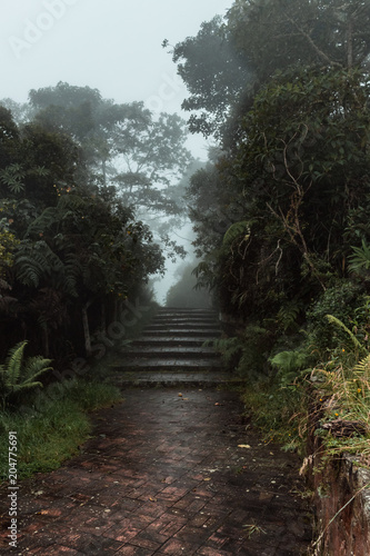 Deurstickers Weg in bos camino