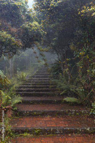 Tuinposter Weg in bos escalas