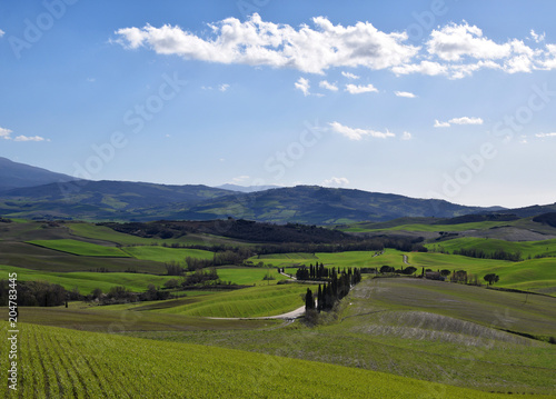 Foto op Aluminium Oceanië Classical Tuscany landscape in Val d'Orcia, Italy