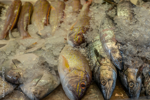 Photo  Heap of colorful fresh fish at the Singapore wet market in China Town - 1